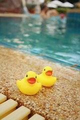 Yellow rubber duck at the swimming pool.
