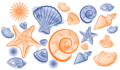 Seashell summer draw
