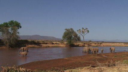 A wide shot of elephants in a river.
