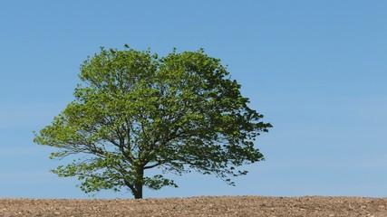 Tree In Summer Breeze