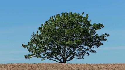 Single Tree Against Blue Sky