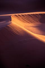 Sand dunes in the desert at sunset