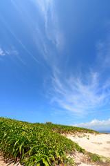 沖縄・海へ続く道