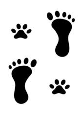 piedi e zampe