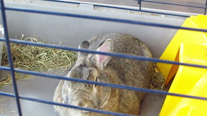rabbit in  cage moves with  nose