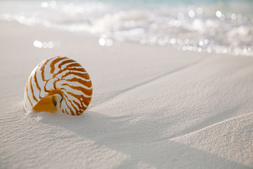 nautilus shell on white beach sand, against sea waves