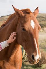 female hand caressing horse detail