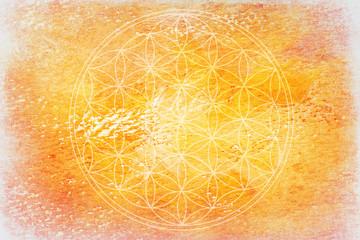 flower of light-sunny backround