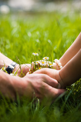 Woman's and man's hands and bouquet of camomiles on grass