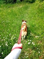 Gassi gehen mit Hund