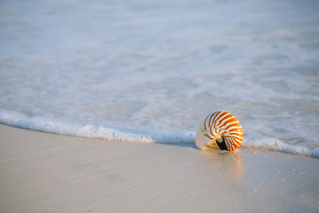 nautilus shell on a sea ocean beach sand