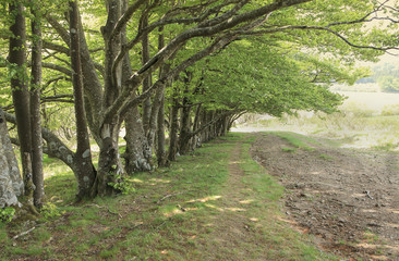 rangée d'arbres