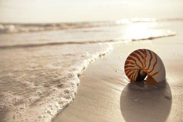 nautilus shell on a sea ocean beach sand with  dark sunset light