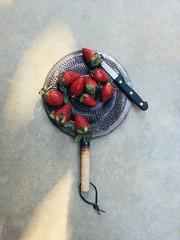 Studio shot of strawberries
