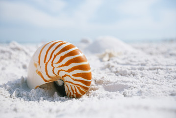 nautilus shell with sea wave,  Florida beach  under the sun ligh