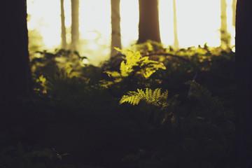 Belgium, West Flanders, Brugge, Detail of fern in sunlight