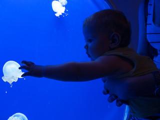 Young Boy In Aquarium