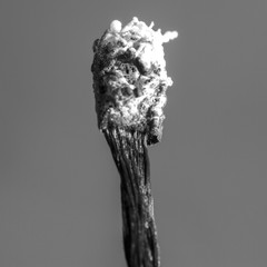 Black and white of burnt match