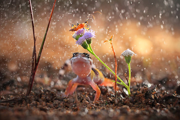 Indonesia, Gecko and butterfly on rainy day