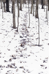 USA, Illinois, Will County, Bolingbrook, Path through winter forest