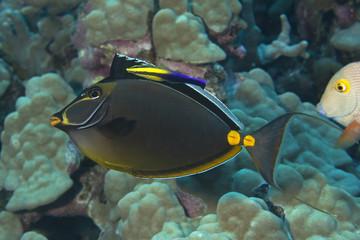 USA, Hawaii, Marine life