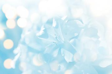 soft blur flower in blue tone