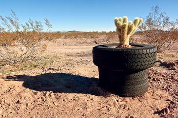 USA, Arizona, Maricopa County, Arlington, Tired pot