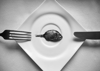 Very small fish on the plate