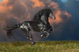 Black Friesian horse runs gallop in summer time