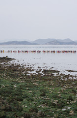 South Korea, Jeollanam-do Province, Jindo, People at Jindo Miracle Sea Festival
