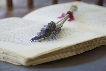 Lavender on old book