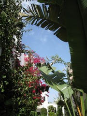 palms, flowers and columns Tunisian