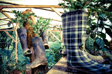 Costa Rica, View of garden of organic vegetables with rubber boots