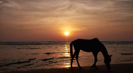 Sri Lanka, Beruwala, Horse grazing on beach during sunset