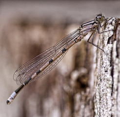 Close up of dragonfly on bark