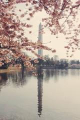 USA, Washington DC, View of The Washington Monument