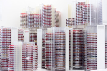 Germany, Stacks of Petri dishes