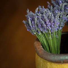 France, Provence-Alpes-Cote d'Azur, Lavenders in flower pot