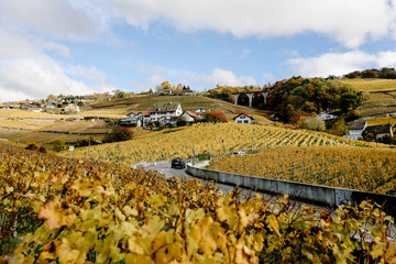 Switzerland, Lausanne, Vineyard terrace in autumn