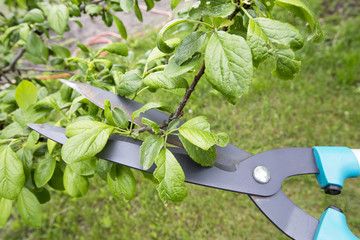 Scissors for cutting branches