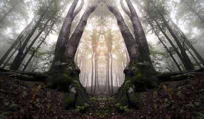 symmetrical forest with trees resembling magical gate