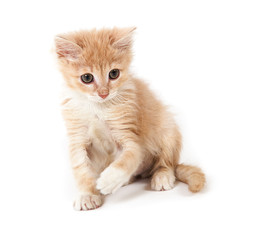 cheerful red kitten playing
