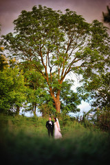 Newlywed  background big tree