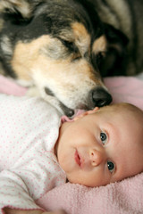Pet Dog Kissing Newborn Baby Girl