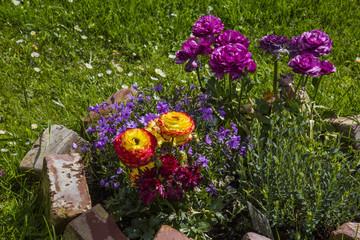 Blumeninsel im Garten