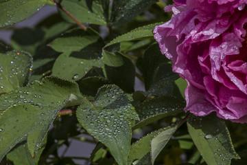 Blumen im Regen