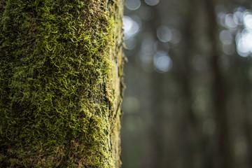 árbol con fondo bokeh