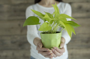 Women are held out a small plant