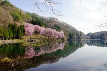 春の中綱湖湖畔