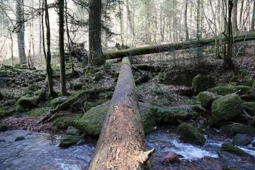 Baum als Brücke